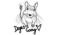 Degus Gang x Můj Degu